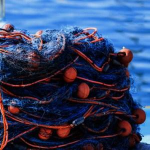 Fisheries & Seafood
